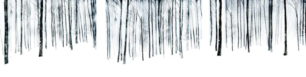 Florian Richter, Winterwald, 97x360 cm, 2010, Pigmentdruck