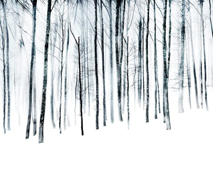 Florian Richter, Winterwald II, 120x97 cm, Pigmentdruck, 2010