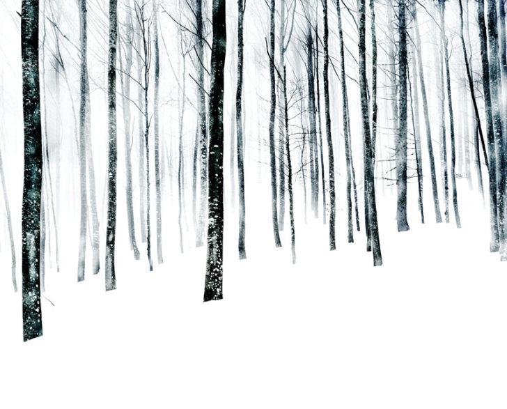 Florian Richter, Winterwald I, 120x97 cm, Pigmentdruck, 2010