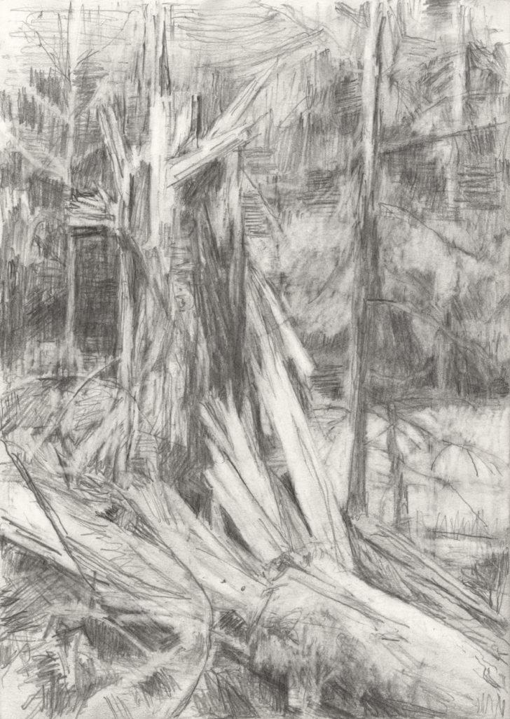 Lutz Bleidorn, Dresdner Heide. Sturmschaden, 2015, 15x21 cm, Graphit auf Papier