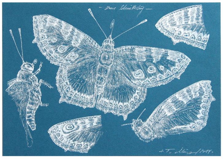 Thomas Löhning, Zum Schmetterling, 21x29,7 cm, 2014, Tusche