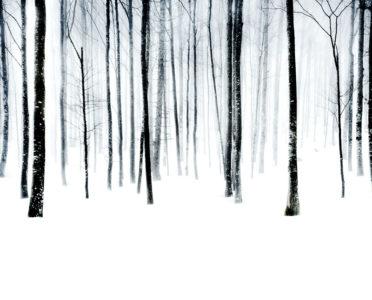 Florian Richter, Winterwald III, 120x97 cm, 2010, Pigmentdruck