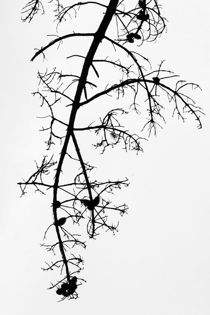 Loreen Hinz, Lines 3, 50x75 cm, 2012, Direktdruck Aludibond