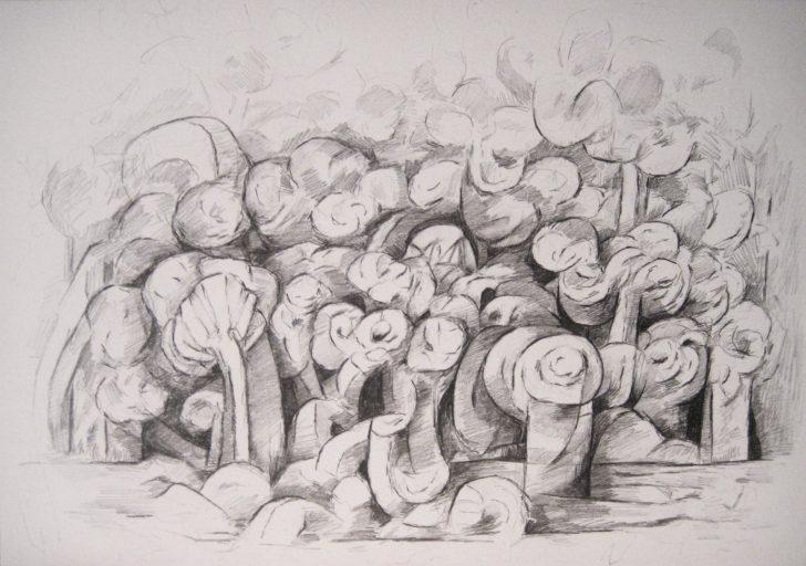 Marten Kirbach, Pflanzung II, 21x29,5 cm, 2013, Graphit auf Papier